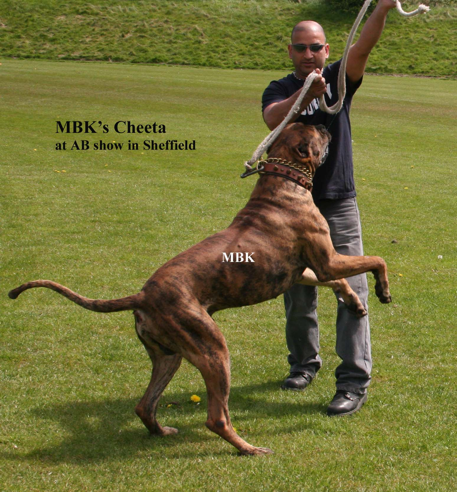 Bully Kutta Information | Pets World