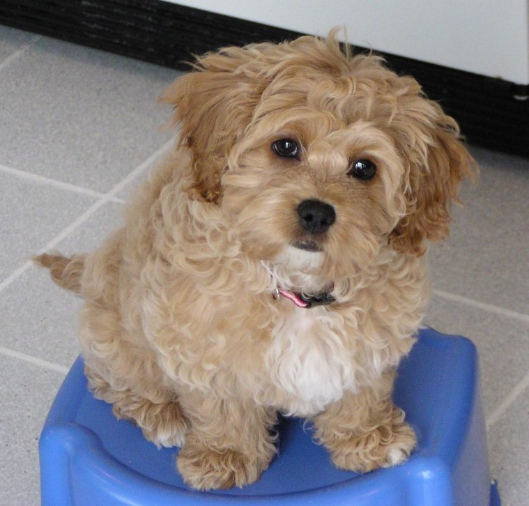 Months Red Sable | Dog Breeds Picture