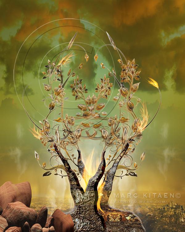 Burning Bush Art MARC KITAEN ARTWORK GA...