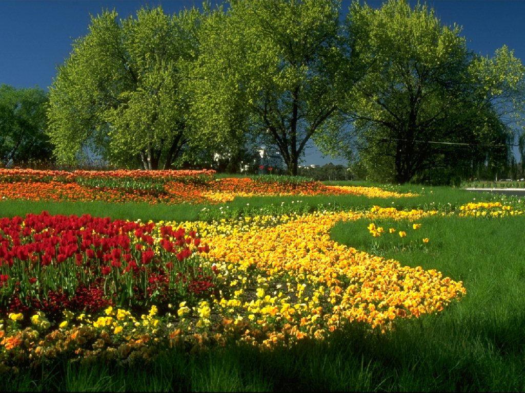 Op een van deze mooie bloemen plaatjes dan verschijnt de wallpaper