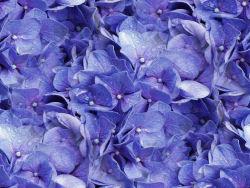 blauwe bloemen en groene
