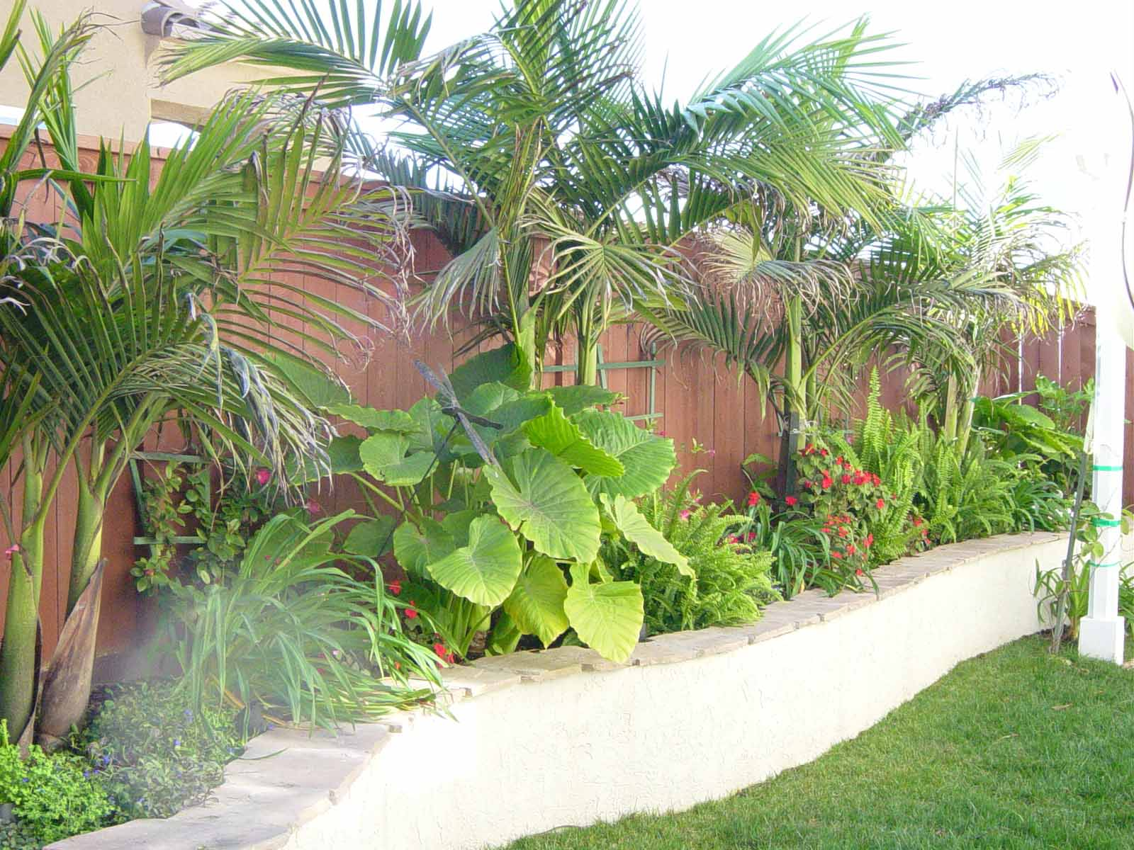 curvy retaining wall with Tropical plants mk landscape