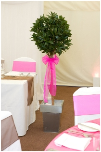 Bay tree with hot pink bow