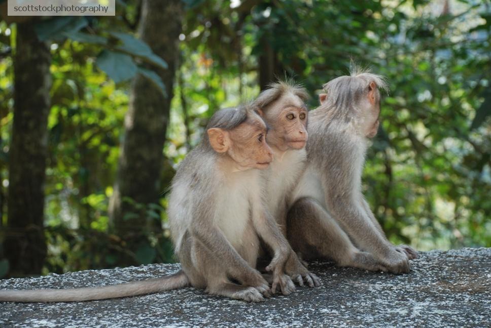 Monkey as Service Animal