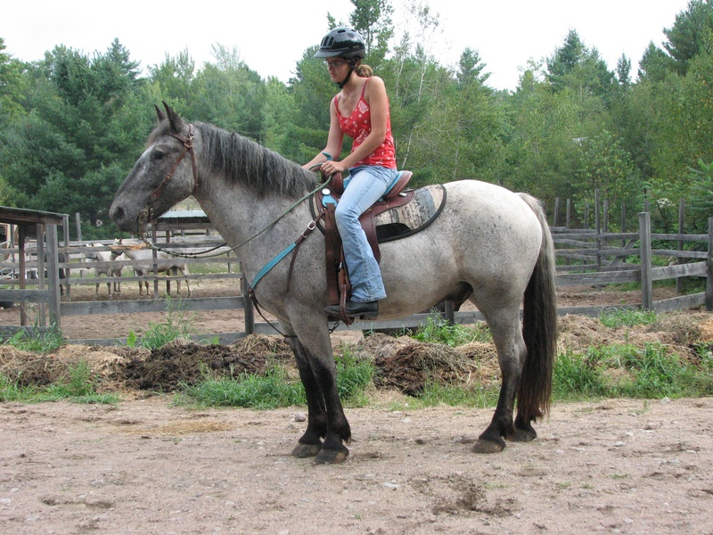 Blue Roan Quarter Horses For Sale in Texas Froelich Legacy Quarter Horses Blue Roan Horses Sale Aqha Grullo And Blue