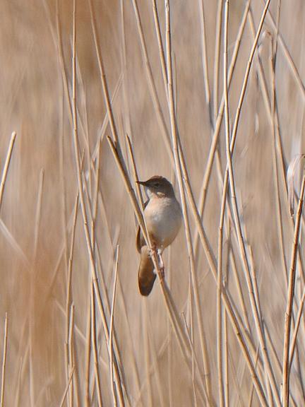 Suffolk Birding with BINS