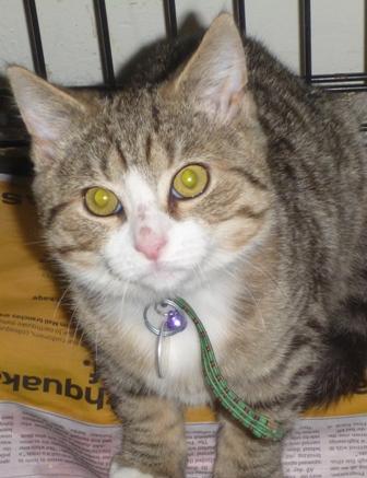 Sydney Pet Rescue Amp Adoption Inc Nz Quake Animal Appeal