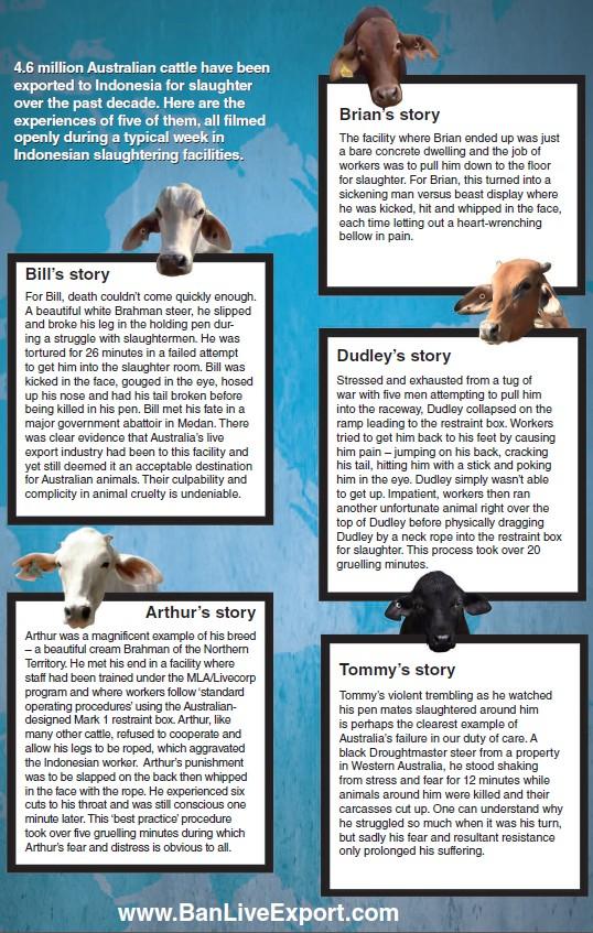Sydney Pet Rescue & Adoption Inc. - BAN LIVE EXPORT APPEAL