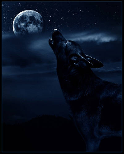 Black wolf howling at moon - photo#5